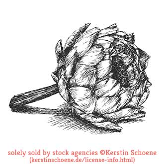 artichoke, vector, drawing, sketch, stock, image, vector, art,